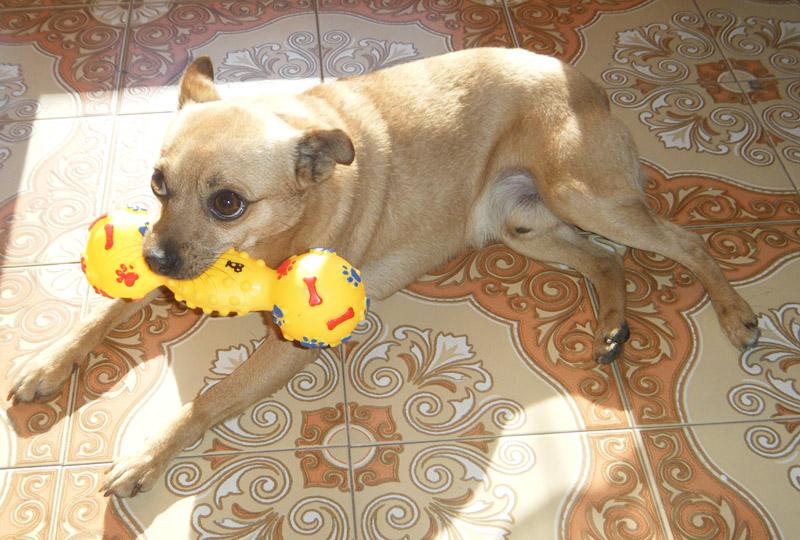 aky_karotina_karotina85_dog_cucciolo_amore_pallina_puppy