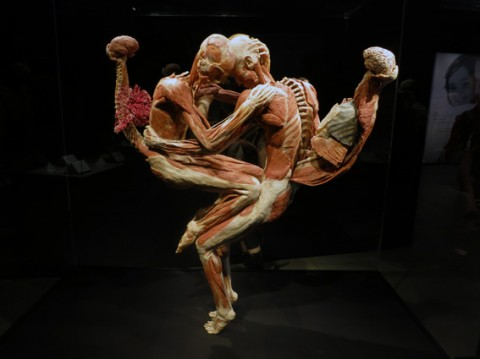 labbraccio_body_worlds_mostra_anatomia_karotina85_abbraccio