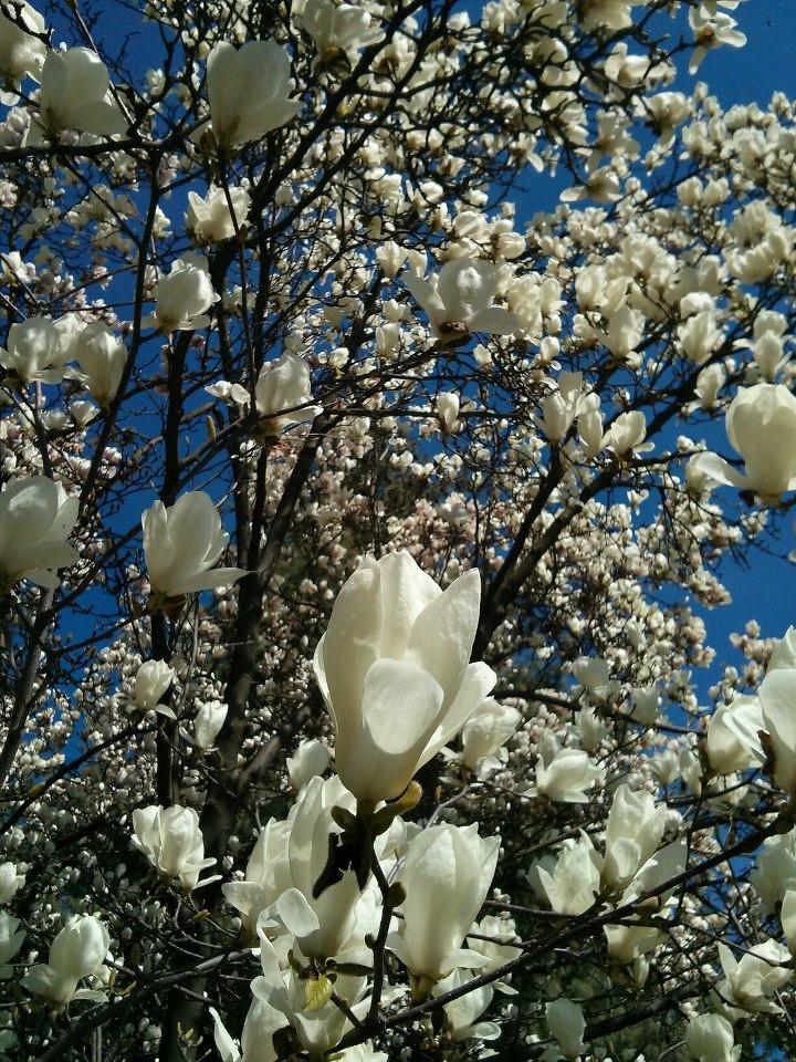 2013 04 15 diario karotina fiori flowers