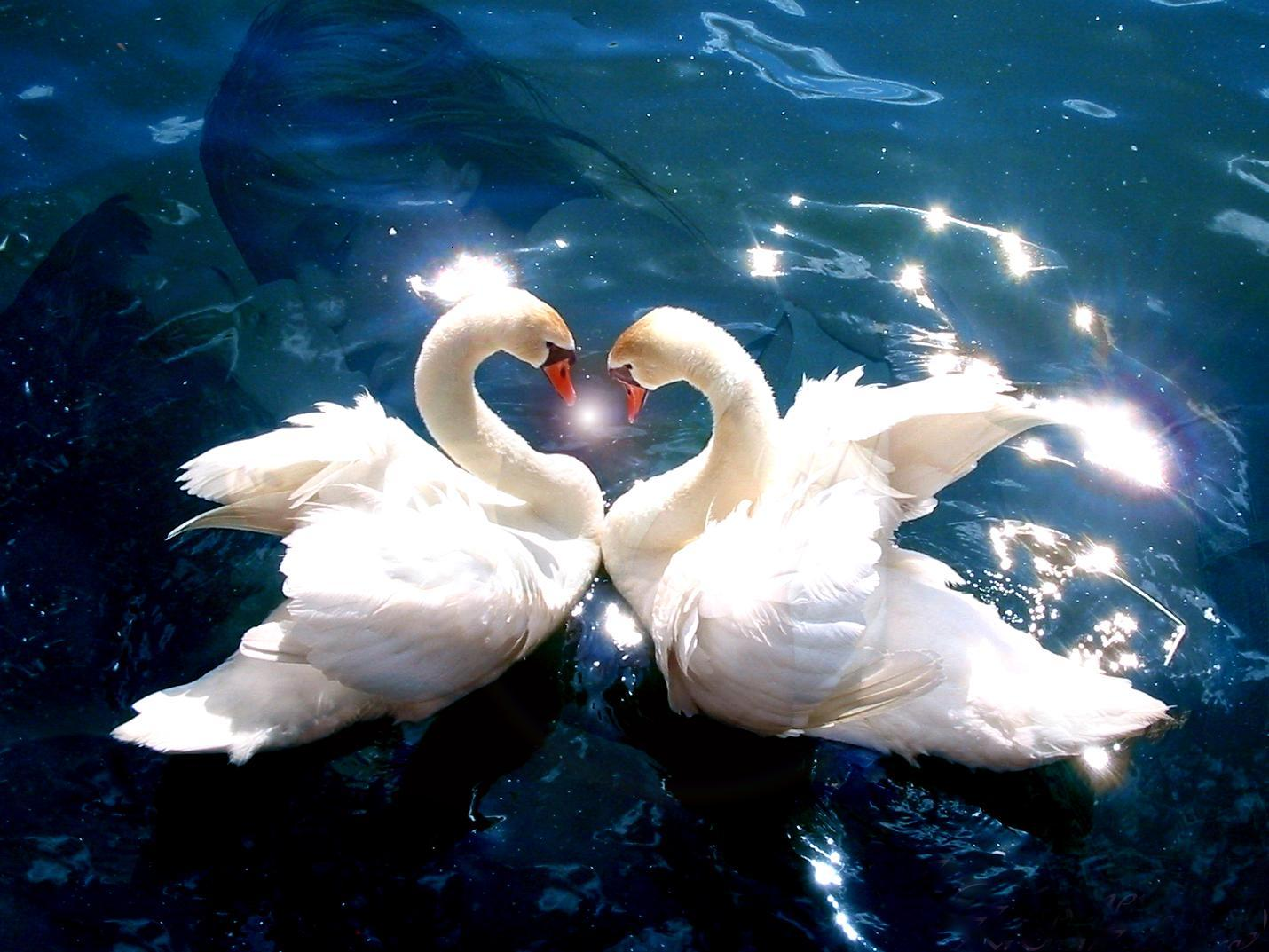2013 06 04 animals-pictures-falling-in-love