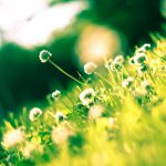 2017 05 23 diario karotina 332 novit sito aggiornamenti garden