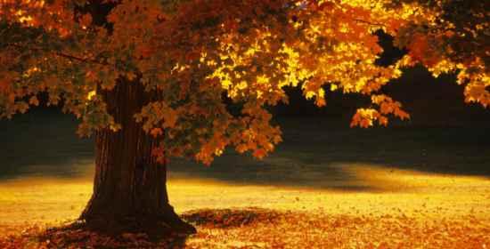 2014 09 04 settembre diario karotina cadono le foglie